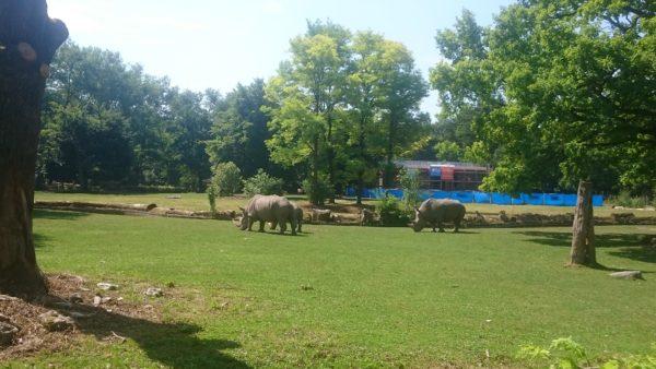 Zoo 8.7.17